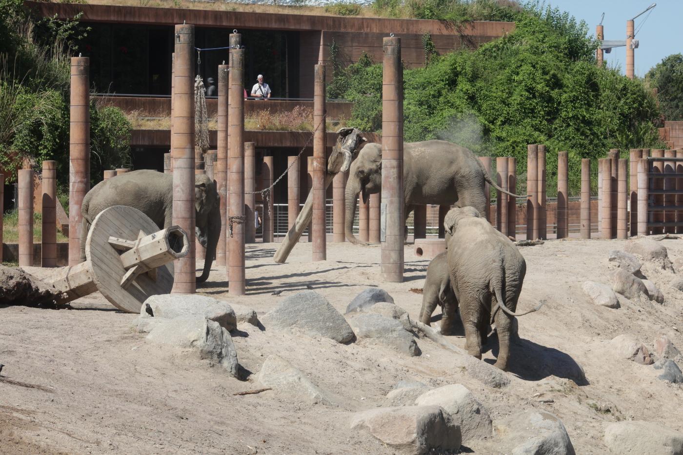 Elefanter i Zoo. Foto: Rolf Larsen.