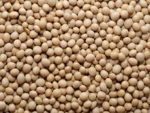 Soy Bean Vegan Healthy Soy Bean