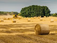 brown hay rolls